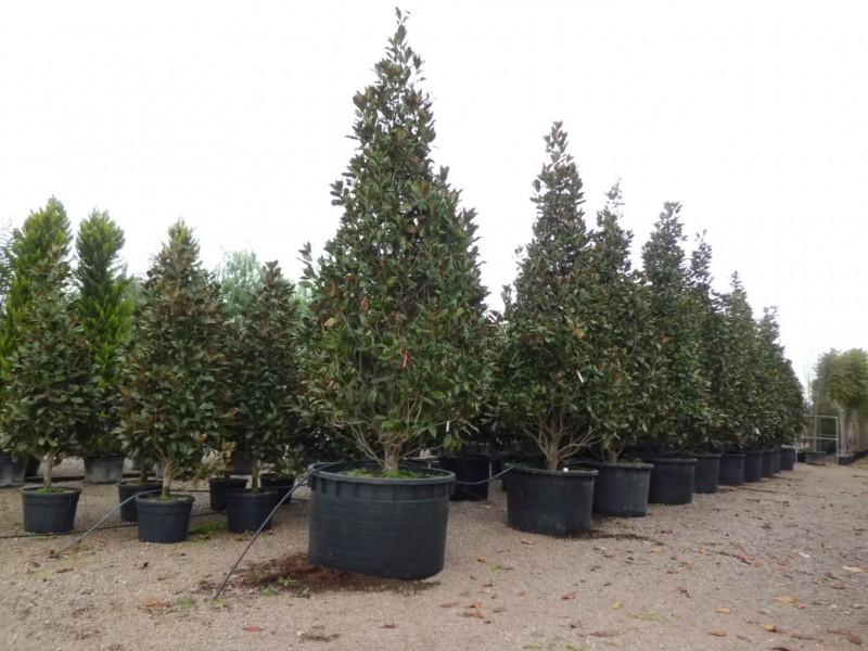 venda arbres a barcelona