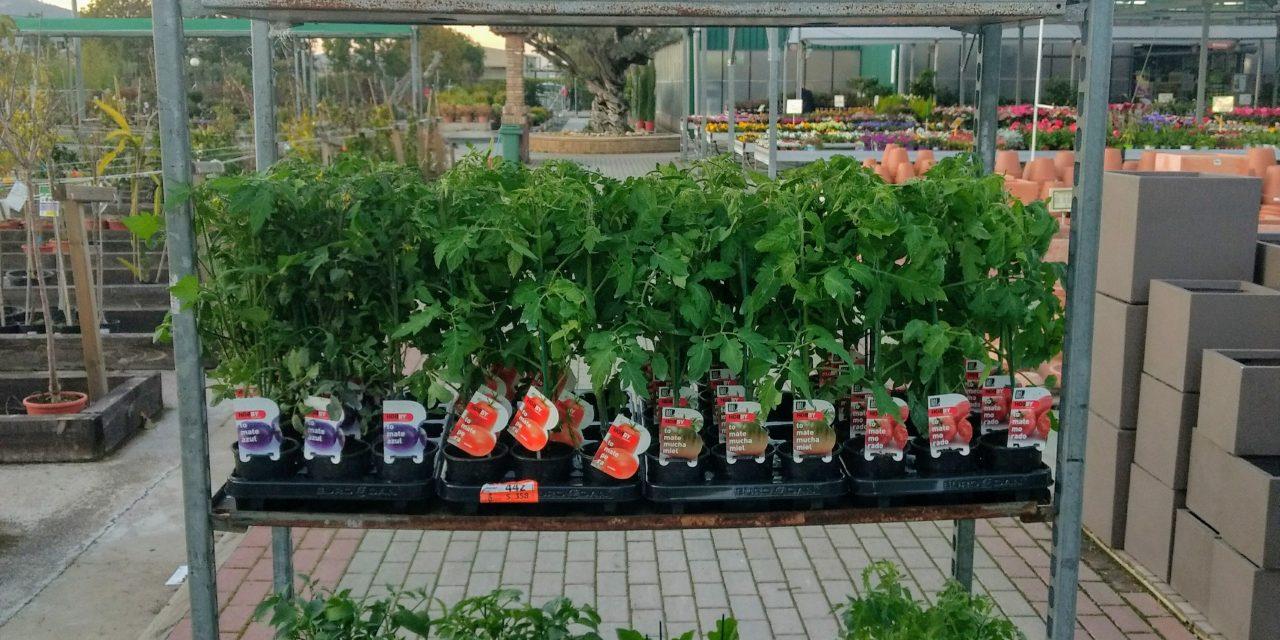 Planter d´Hortalissa de primavera-estiu de nou a la venda