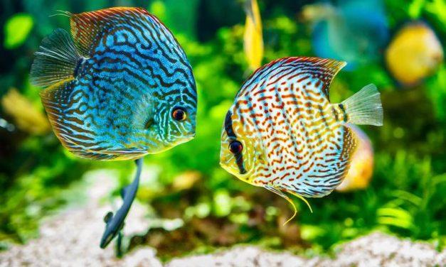 Com cuidar els peixos d'aquari durant les vacances