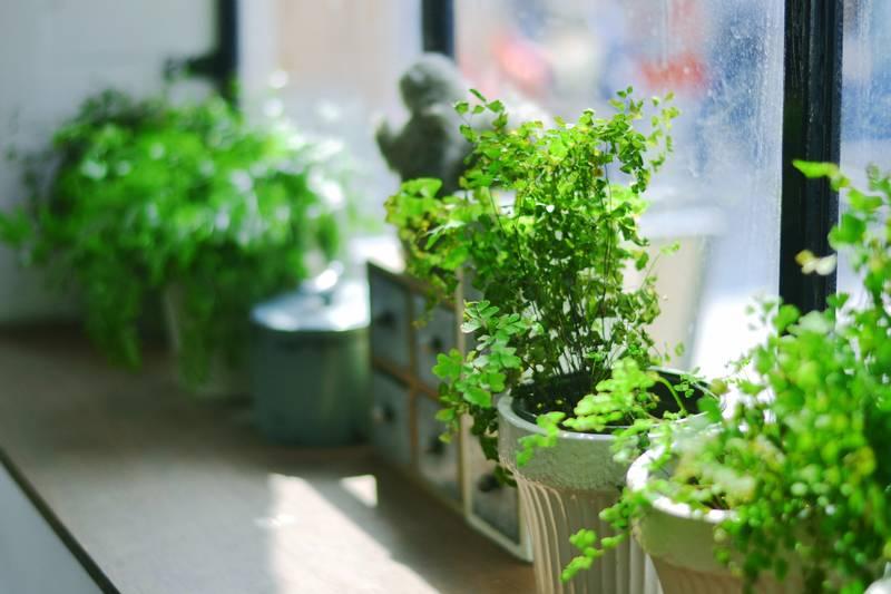 plantes-interior-cures