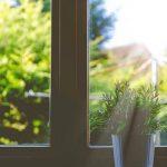 La importància de la temperatura i la llum en la cura de les plantes d´interior