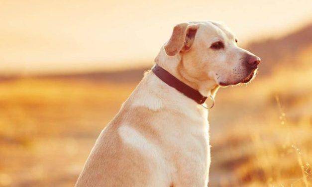 Com prevenir i eliminar les plagues de puces de la teva mascota