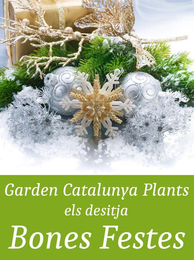 bones-festes-nadal-2015-catalunya-plants