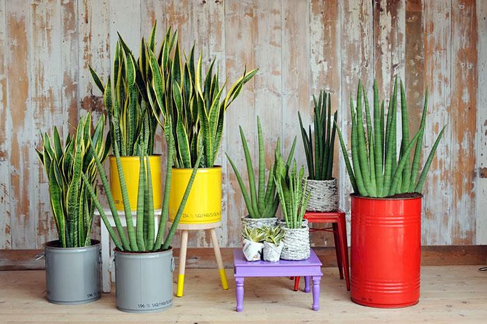 Idees per decorar amb plantes