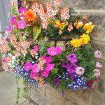 Plantes resistents ideals per aquest estiu