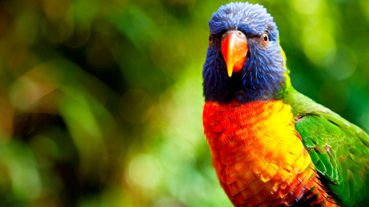 Com i per què alimentar adequadament a un ocell?