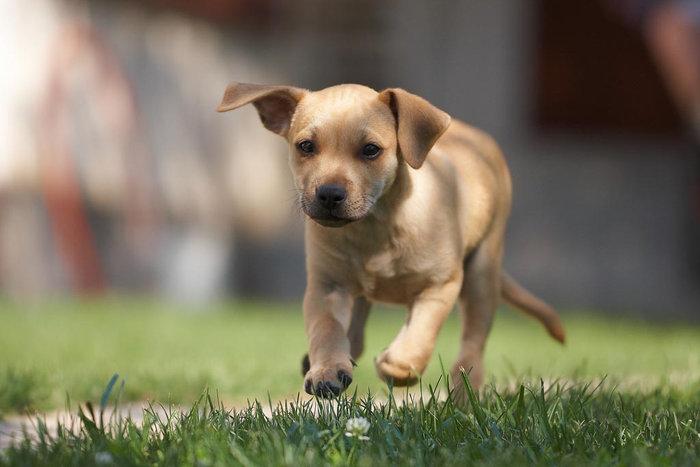 3 coses que has de fer per fer feliç al teu gos.