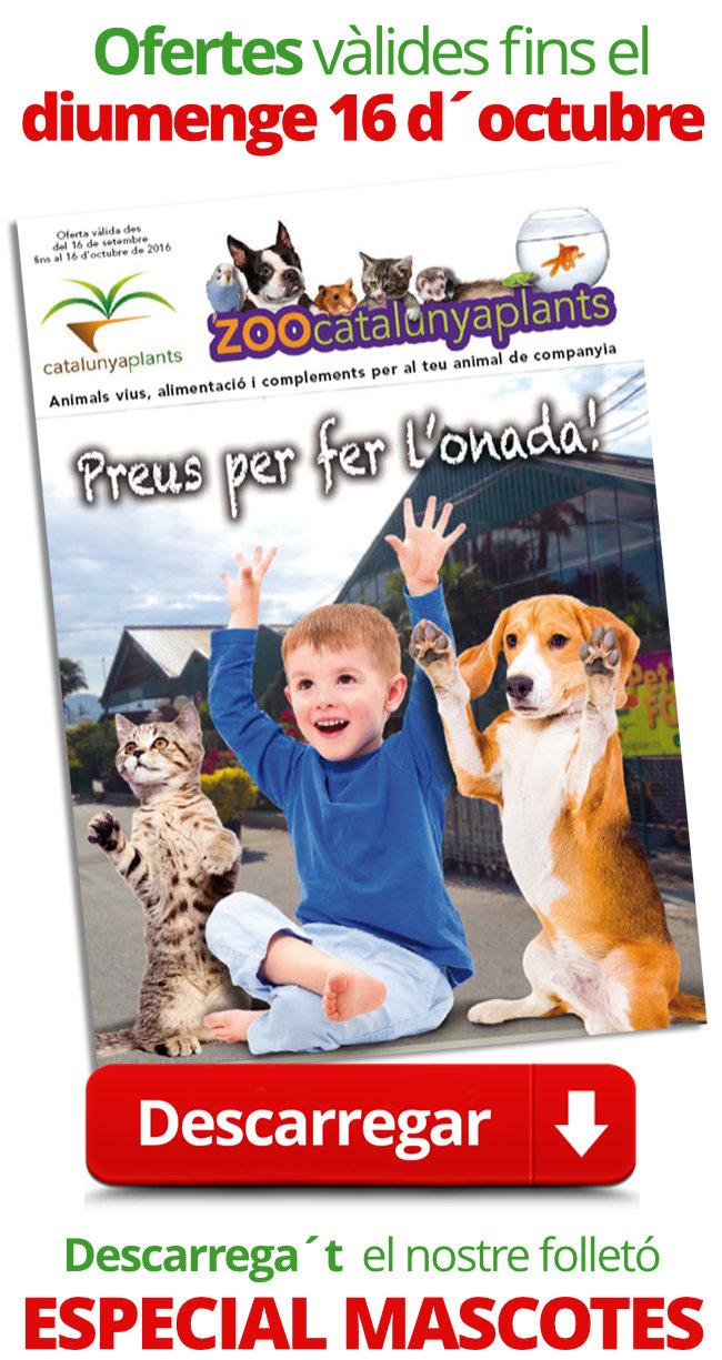 Les millors ofertes per la teva mascota (solament fins el diumenge 16)