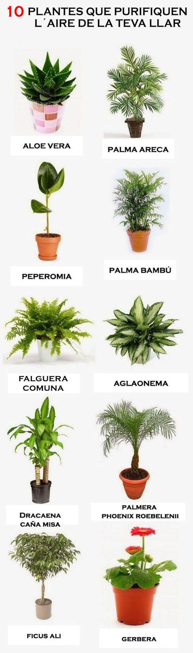 10 plantes que purifiquen l'aire de la teva llar.