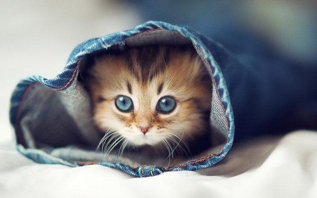 El teu gat pateix estrès ?: símptomes i solucions.