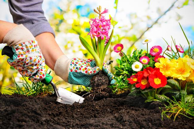 Consells de seguretat i salut en jardineria.