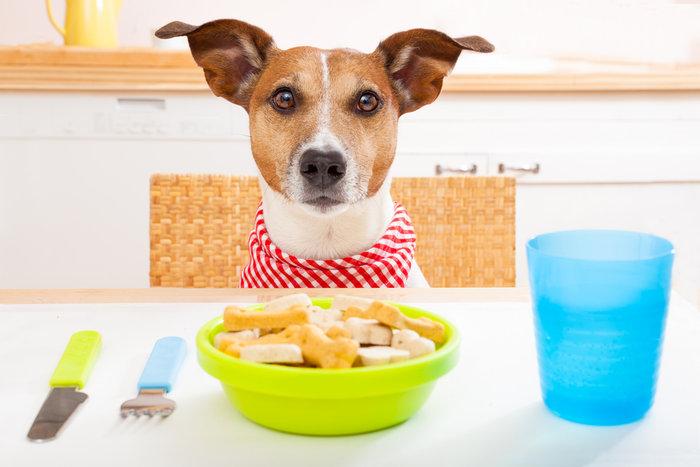 Gossos amb estómac delicat: com cuidar-los