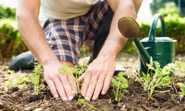 Agenda del jardí d´Abril
