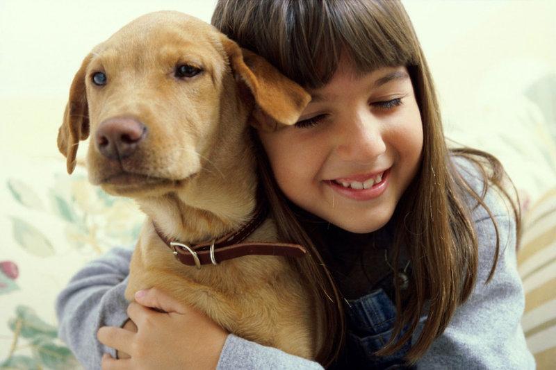 Claus per alimentar el teu gos adequadament