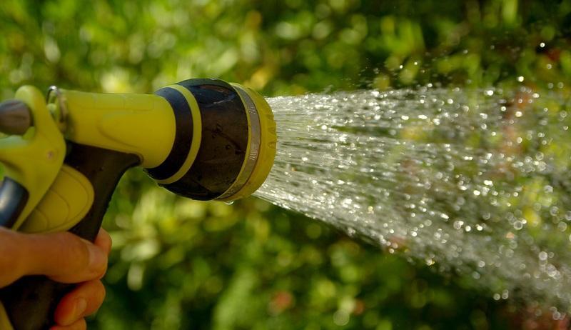 Com evitar que la calor destrueixi les teves plantes