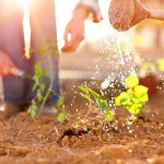 Agenda del jardí d´Agost