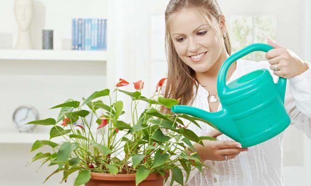 5 maneres de matar una planta d´interior