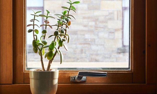 La importància de la llum en les plantes