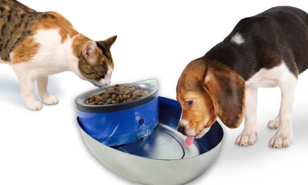 Com mantenir a la teva mascota sempre hidratada