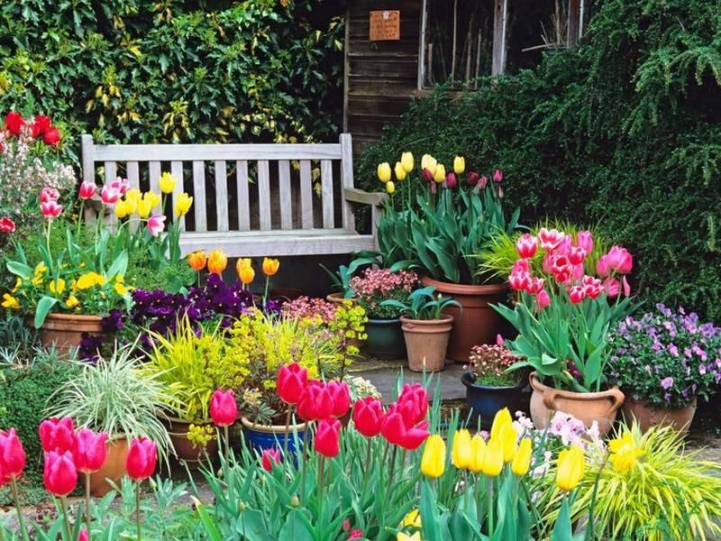 Agenda del jardí de maig