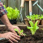 """Curs """"El jardí-hort ecològic. (25 de maig de 2019)"""