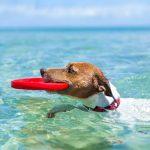 Com mantenir fresc al teu gos aquest estiu