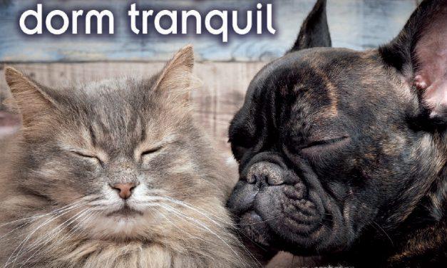 Articles al millor preu per al teu animal de companyia