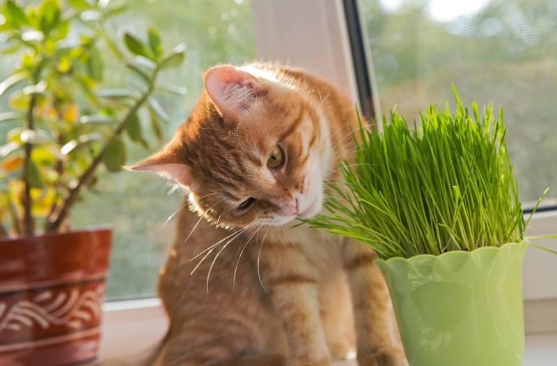 Què plantes tenir a casa si tens gats