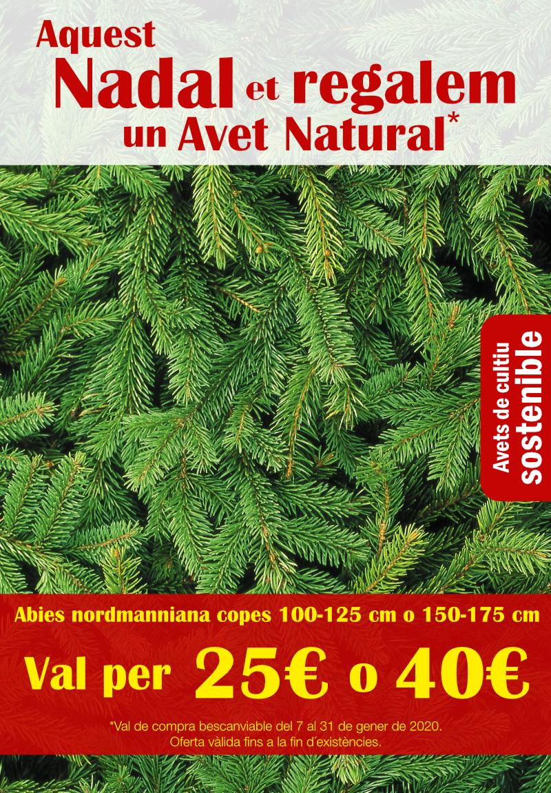 Regalem un avet natural