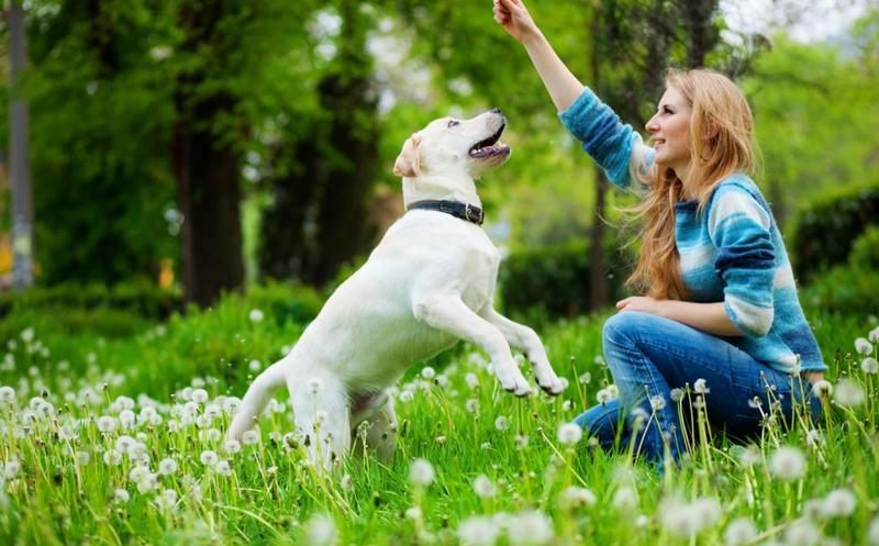 Com premiar al teu gos de manera efectiva