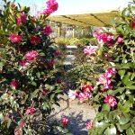 Descobreix la bellesa de les acidòfiles