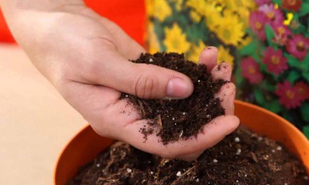 El sòl adequat per a les plantes