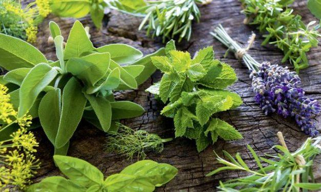 5 plantes que no han de faltar en el teu jardí