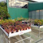 Nova Zona Outlet de Plantes a Catalunya Plants