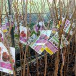 Arriba el fred: Comença la temporada de plantació dels arbres fruiters.