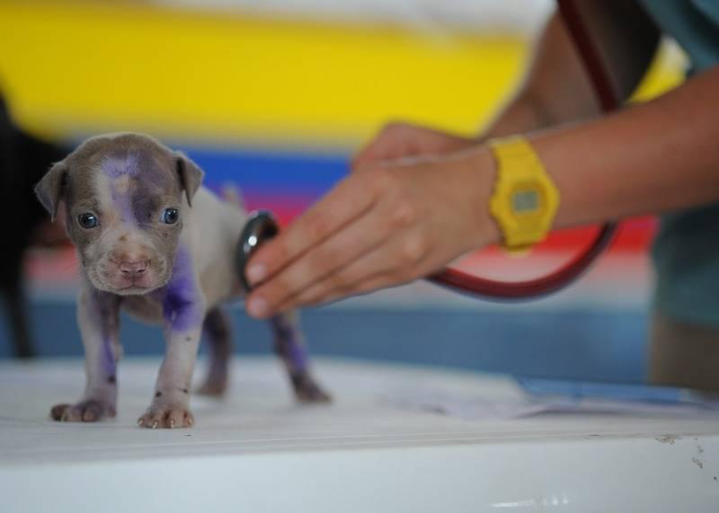 visites dels cadells al veterinari