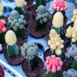 Cactus: cures i caracteristiques