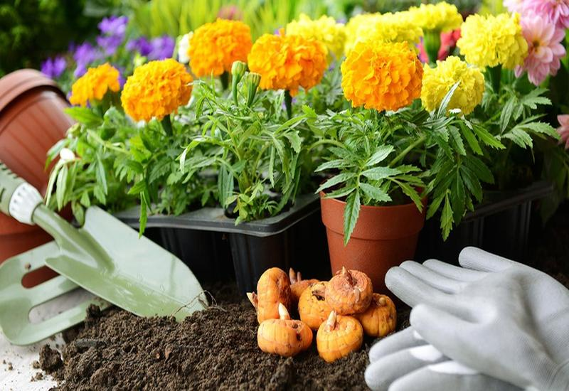 Bulbs d´Estiu: els has de plantar a la primavera!
