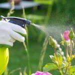 Cuida de les teves plantes de les plagues aquesta primavera