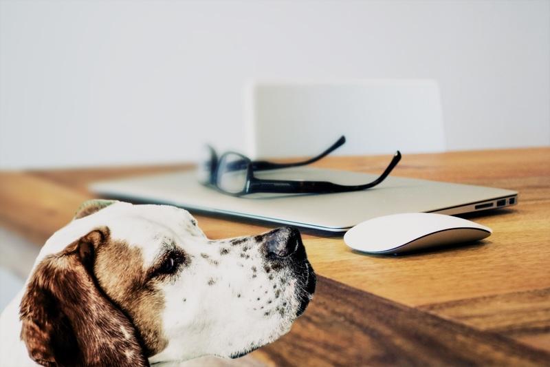 Gossos: què fer amb ells durant el confinament?