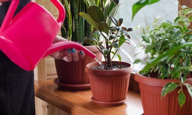 Com regar les plantes a la primavera