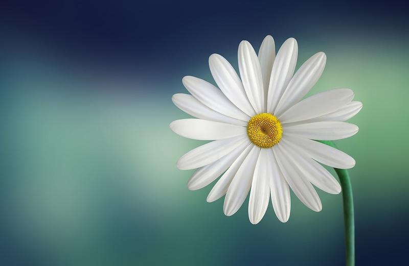 A la primavera decora la teva llar amb flors fresques