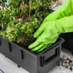 Com transplantar i adobar les plantes a la primavera