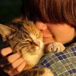 10 tips per fer feliç al teu gat