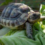 Tortugues: mascotes ideals per als nens