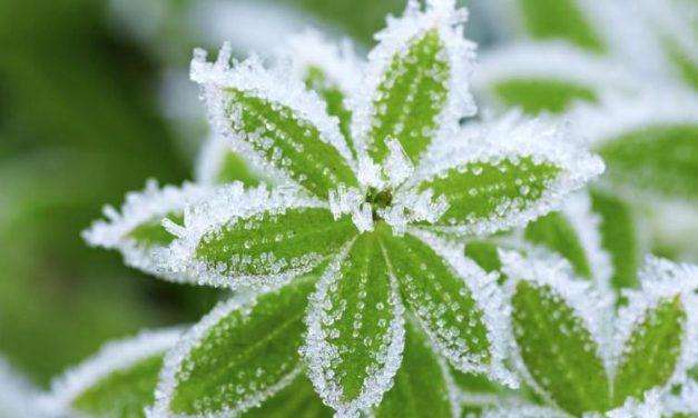Com protegir les teves plantes a l'hivern