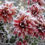 Plantes fora de perill del vent, el fred i la neu