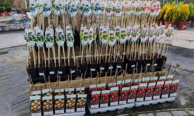 Ja a la venda el fruits dels bosc: nabius, groselles, mores i gerds