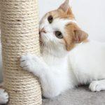 Beneficis dels rascadors per a gats