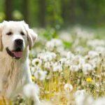 Com tractar les al·lèrgies de la nostra mascota